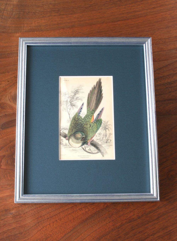 アンティーク版画 Bird – 緑インコ